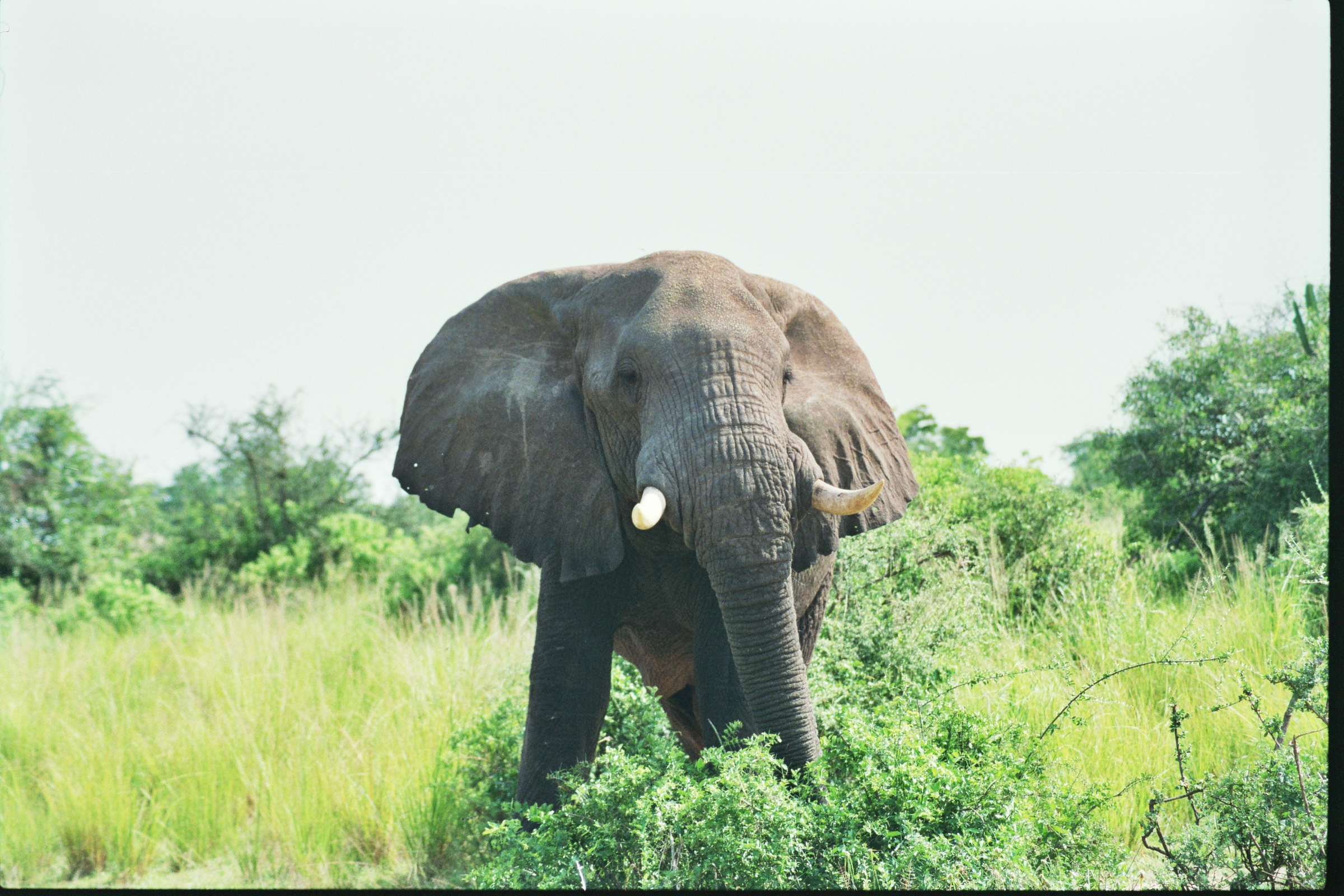 The Best National Parks in Uganda
