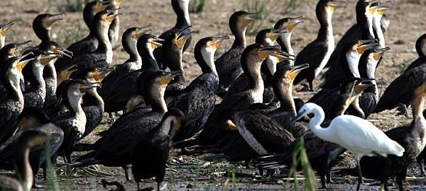 Uganda birding safaris to Queen Elizabeth National Park