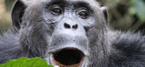3 Days Rwanda Chimpanzee Tracking Safari