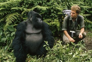 Uganda safaris gorilla