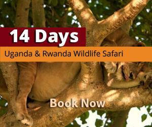 Uganda and rwanda wildlife safaris