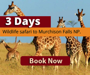 3 Days wildlife safari to Murchison Falls National park Uganda