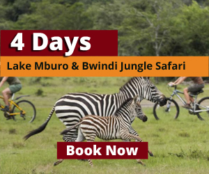 Wildlife safari to Lake Mburo National Park uganda
