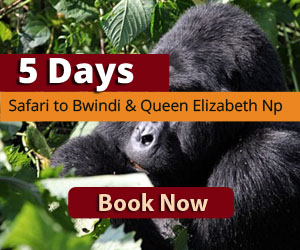 Wildlife safari to Queen Elizabeth National park
