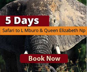 Lake Mburo and Queen Elizabeth Wildlife safari