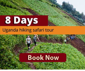 Uganda hiking safari tour