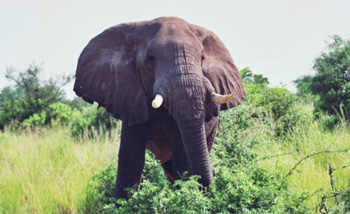 Wildlife safari tours in Uganda