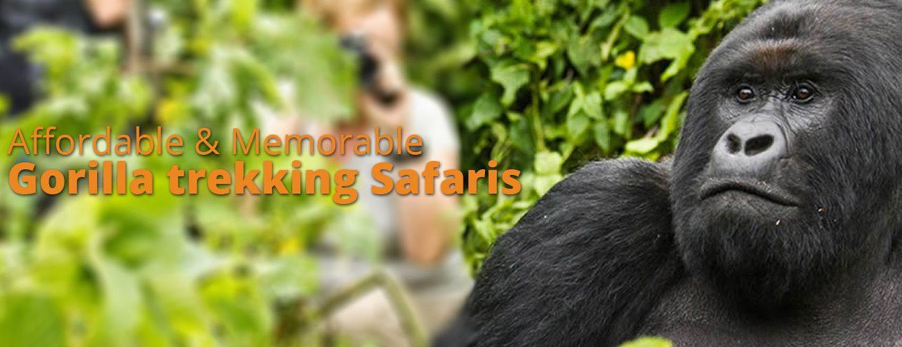Gorilla tours safaris in Uganda